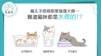 【破解冷知識】貓主子遇到容器都能完美融入!貓咪真的都是水做的嗎?!