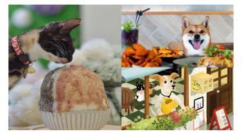 和毛小孩來場浪漫約會!網友激推「這5間」台北寵物友善餐廳,保證療癒你的心和胃!