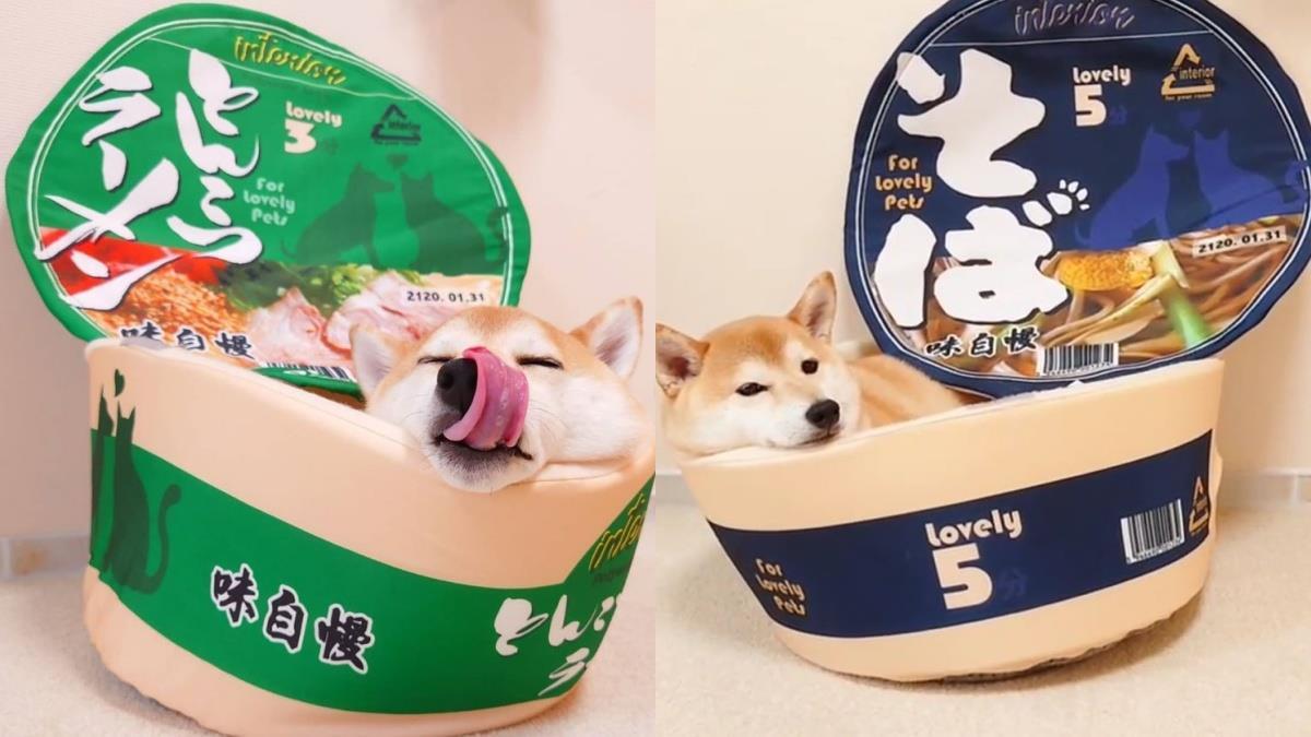 人客阿,你的特製泡麵好了哦!日本推特熱議超可愛「泡麵寵物床」,貓奴狗控全都被收服♥