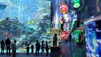 來去水族館住一夜!桃園夢幻水族館「X Park」4大展館首次公開,體驗「魚」生就靠這次~