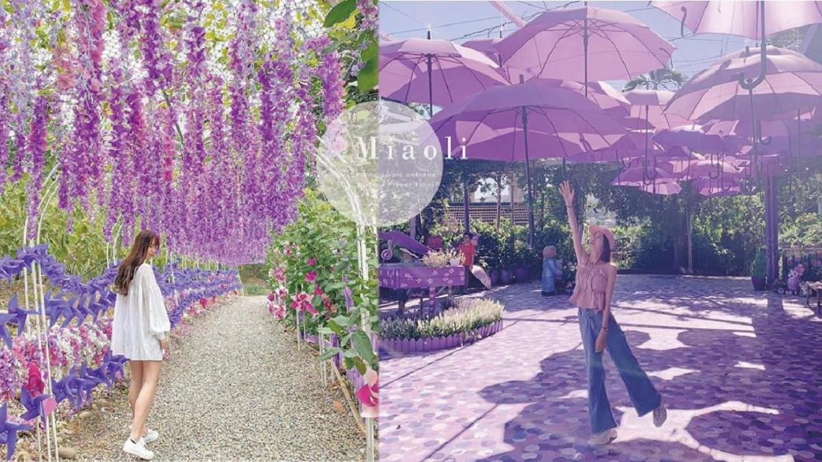 紫色控尖叫!苗栗「噢哈娜咖啡屋」飛天紫色雨傘+紫藤花隧道,大拍美照到手軟~