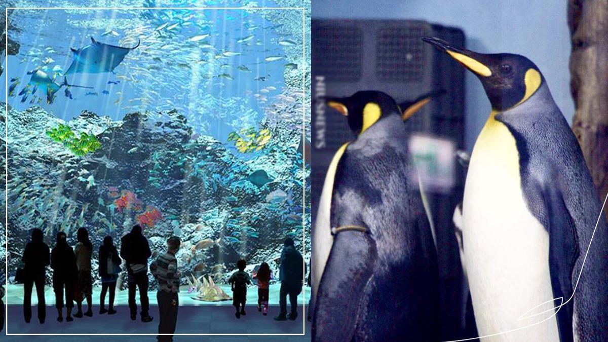 桃園水族館「Xpark」入場券開售日期出爐!企鵝海底隧道咖啡廳,3大亮點一次看!