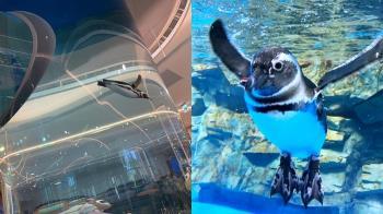 來自日本的台灣首座都會型水生公園「Xpark」8月7日開幕 精彩看點搶先報你知!