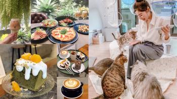 一條街就能逛整天!走訪宜蘭爆紅「文青咖啡街」,吃下午茶還有貓主子陪玩會不會太幸福~