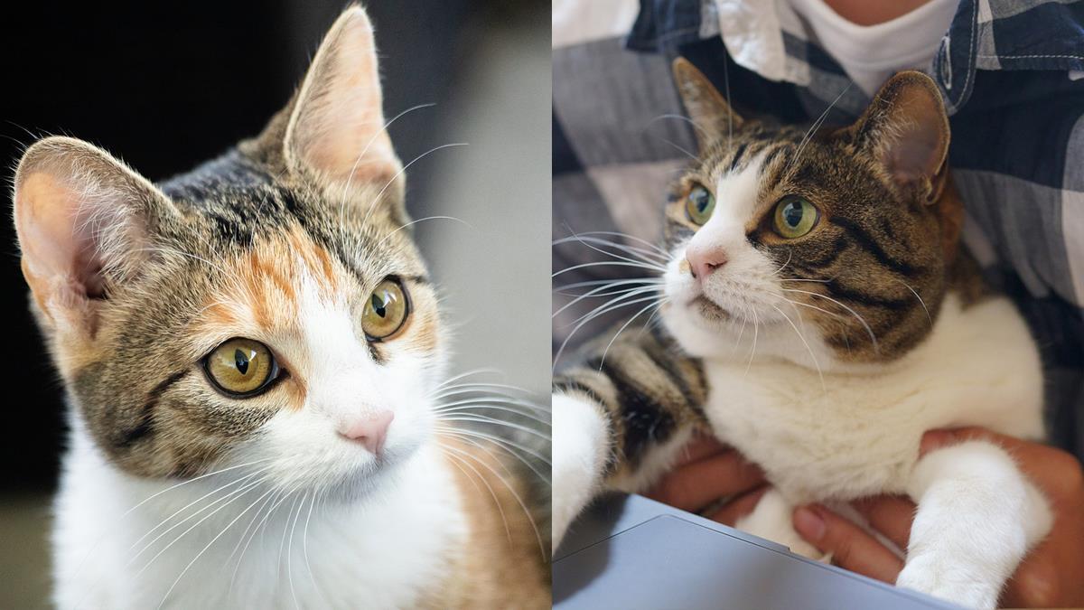 日本都市傳說-你也被NNN監視著嗎?日本的貓咪都市傳說