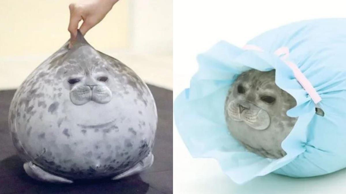 這麼可愛還不快「豹」緊處理♥超療癒「海豹懶人QQ枕」人氣MAX,探頭露出廢萌表情真的太萌啦~