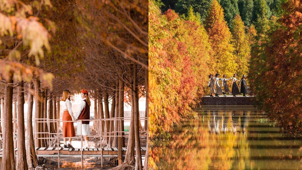 秋冬季必去的絕美景點!全台特搜7大仙氣爆棚「落羽松秘境」,最近的居然搭捷運就可以到~
