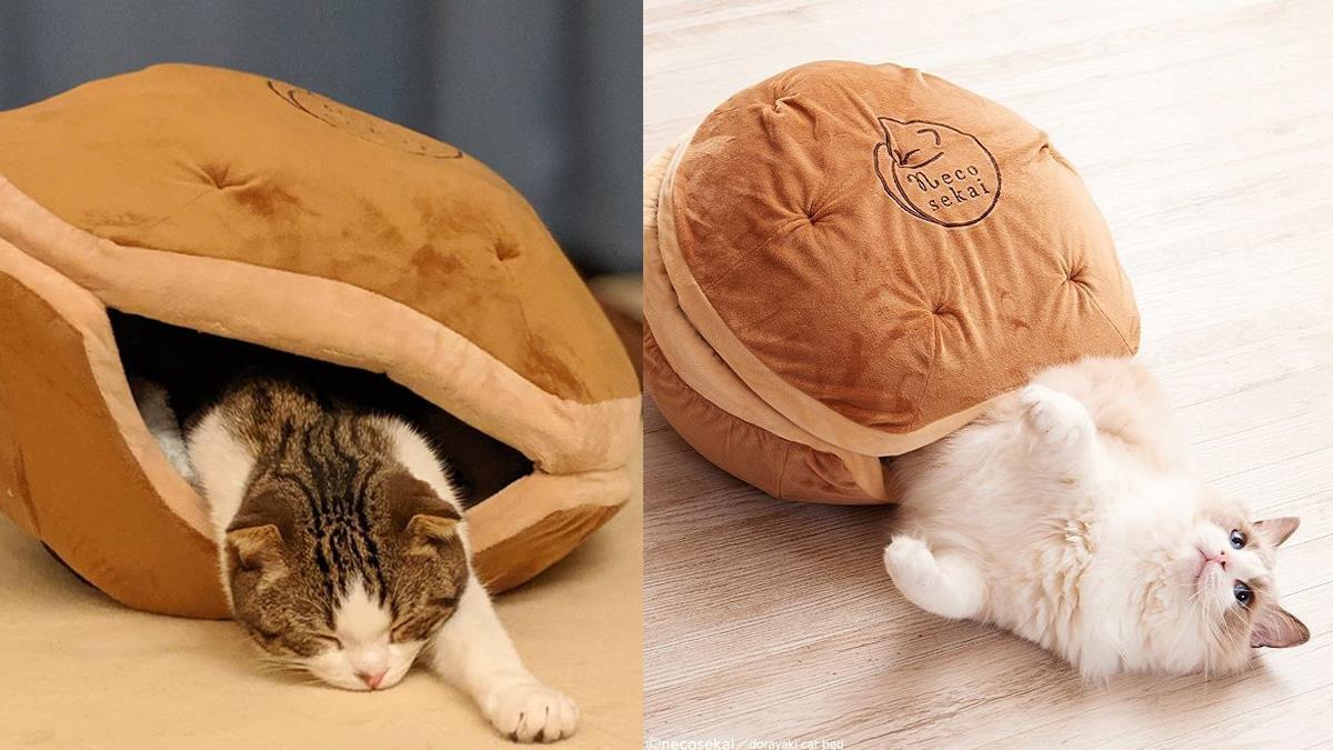 銅鑼燒的內餡居然是貓咪?喵星人最愛的「銅鑼燒被窩」,冬天鑽進去主子就再也不想出來了啦~
