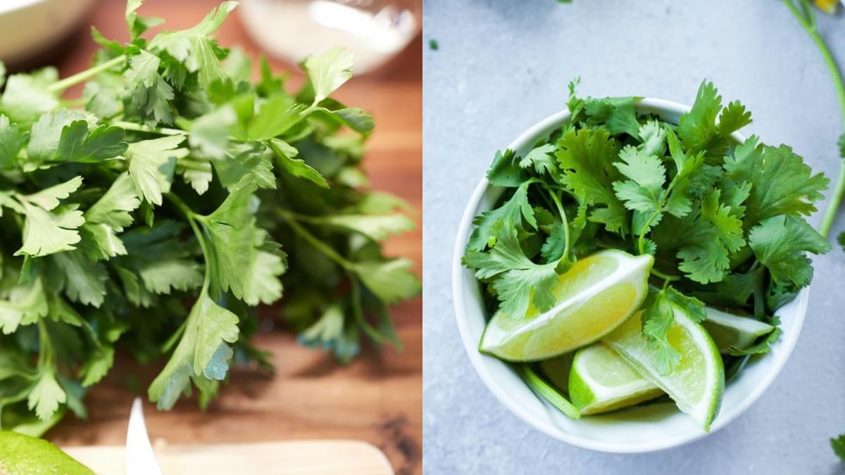 再忘東忘西就給我吃香菜!營養師認證香菜含「4大優點&功效」,打成汁顧健康還能改善金魚腦?