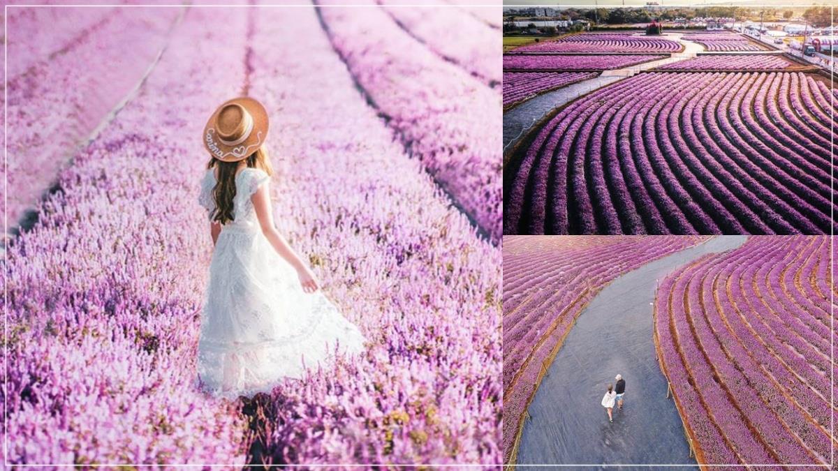 絕美法式美景底加!台版普羅旺斯「夢幻粉紫仙草花海」只到這天,7大仙境打卡熱點根本拍不完!