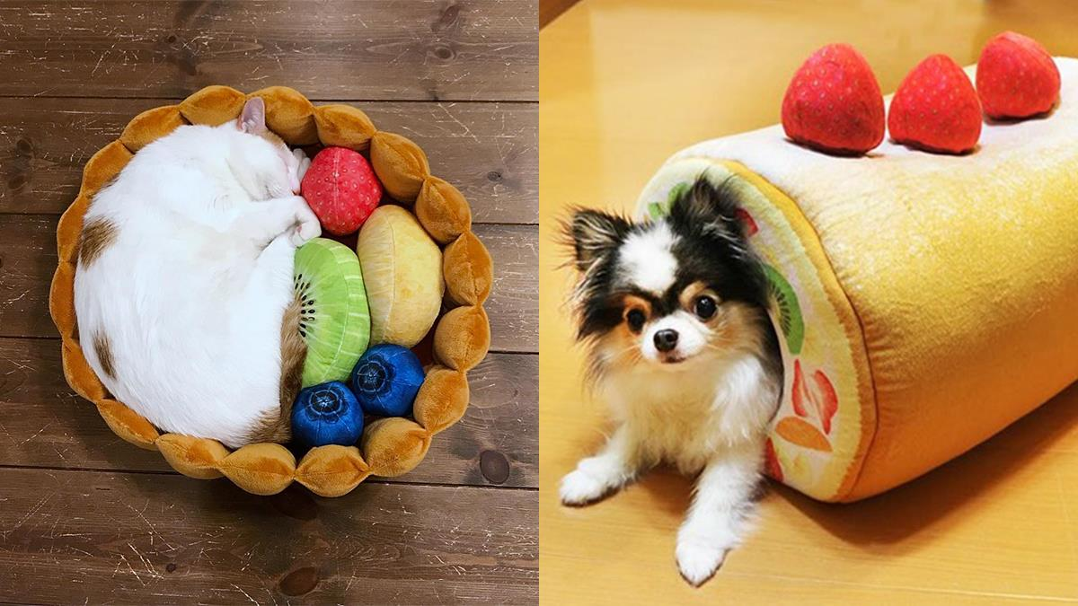 我家小主變成蛋糕捲啦!「甜點系寵物睡窩」萌殺奴心,水果貓咪塔根本0違和感!