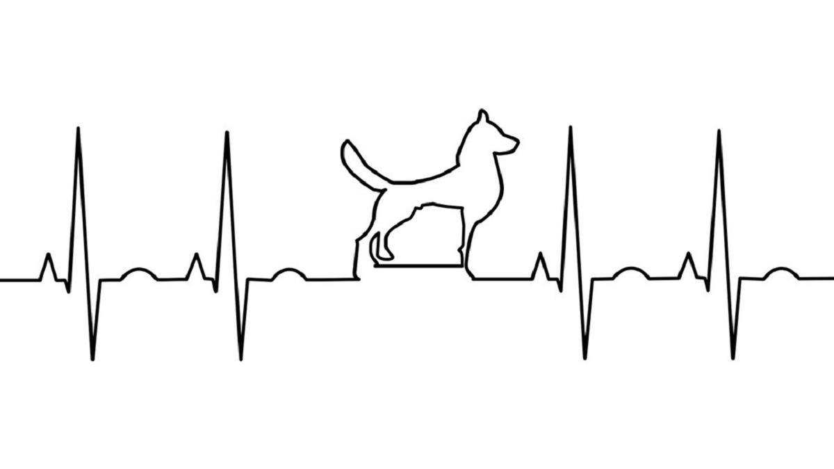 爆紅心理測驗!選一種動物測你的「前世今生&靈魂伴侶」,心臟不夠強的不要找男友測啊