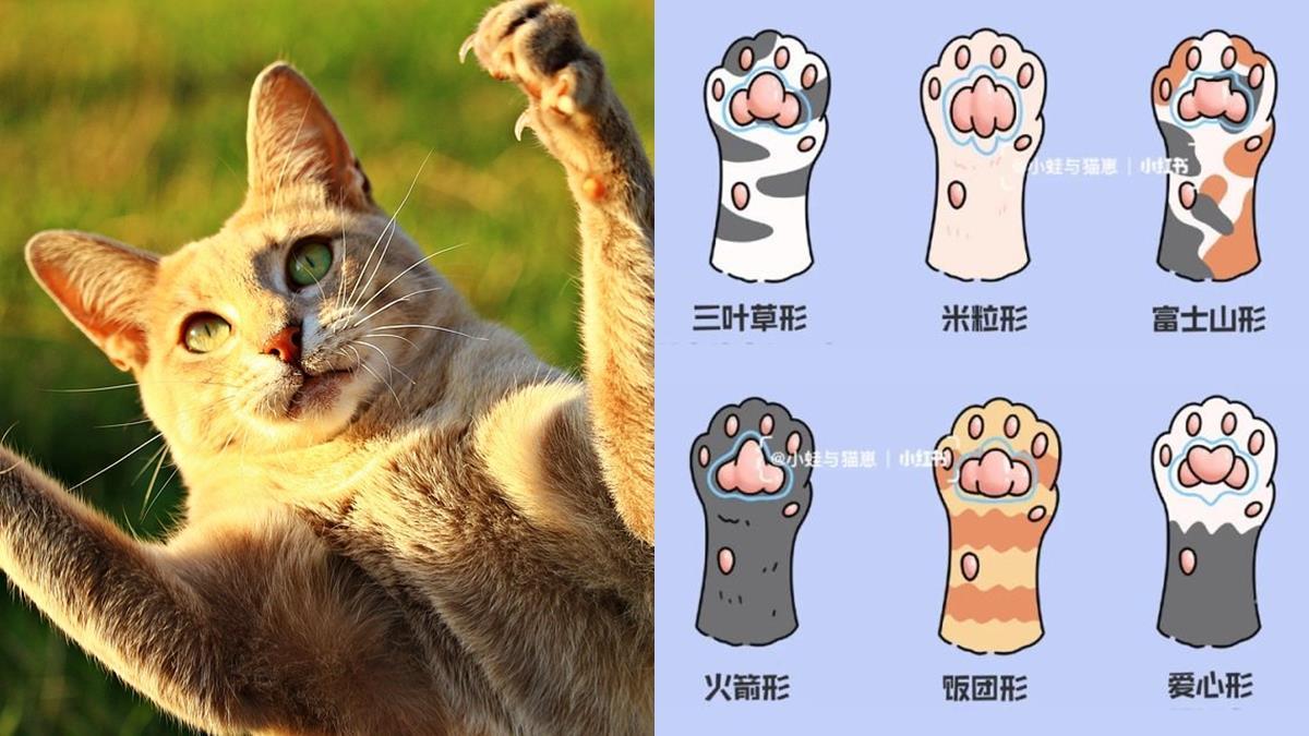 肉球藏著貓咪的小秘密!心理測驗「肉球看喵星人的性格」,火箭形狀的凶巴巴最難搞?!