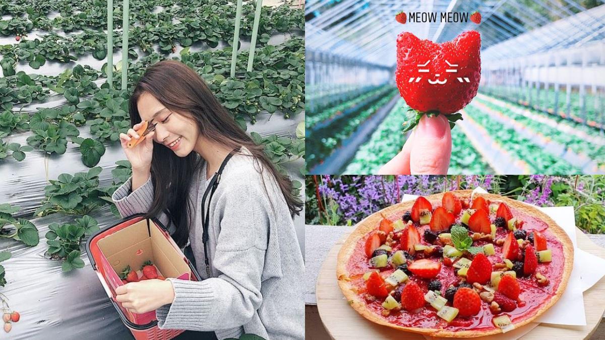 一日草莓農夫我當定了精選「六大超人氣草莓園」女孩們必去,現採現吃、還能現烤成新鮮莓果派~