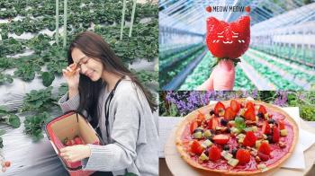 一日草莓農夫我當定了🍓精選「六大超人氣草莓園」女孩們必去,現採現吃、還能現烤成新鮮莓果派~
