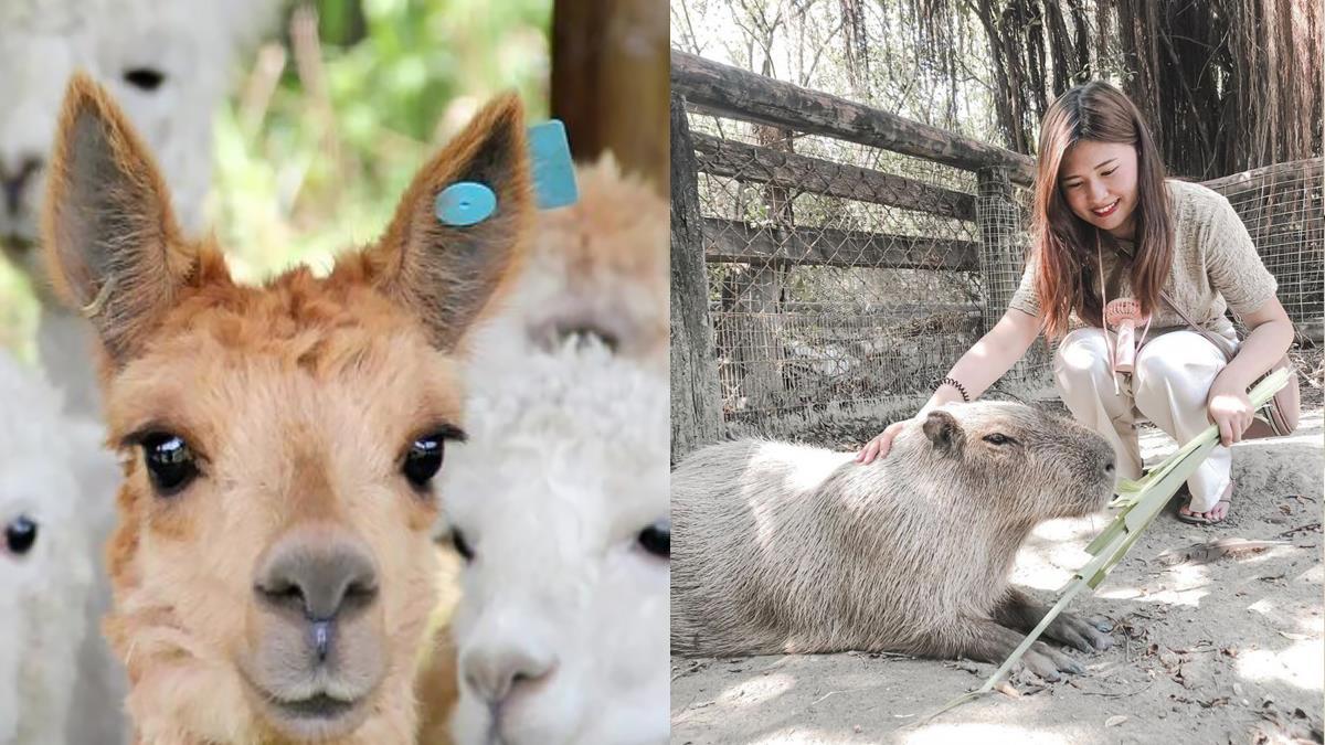 羊駝水豚台灣也見得到!全台6大動物園「費用、特色總整理」,居然還能夜宿園區、深夜導覽!