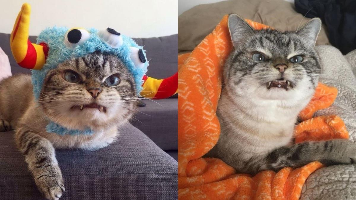 小惡魔貓咪駕到!派到笑的「全世界最不爽的貓貓」勸你別招惹,凶狠獠牙+厭世眼神越看越可愛♥