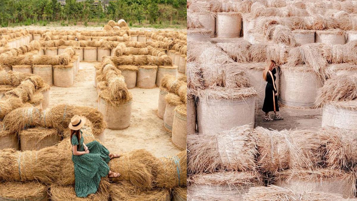 巨大稻草捲美翻天!限定打卡景點「捲心酥稻草迷宮」,不只能在裡面闖關還能拍出奇蹟美照~