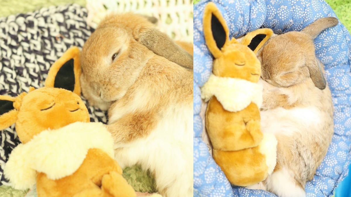 每天都要一起睡搞搞!日本Q萌小兔子「天天跟伊布耍恩愛」,跨越種族的雙胞胎情讓人甘願融化啦~