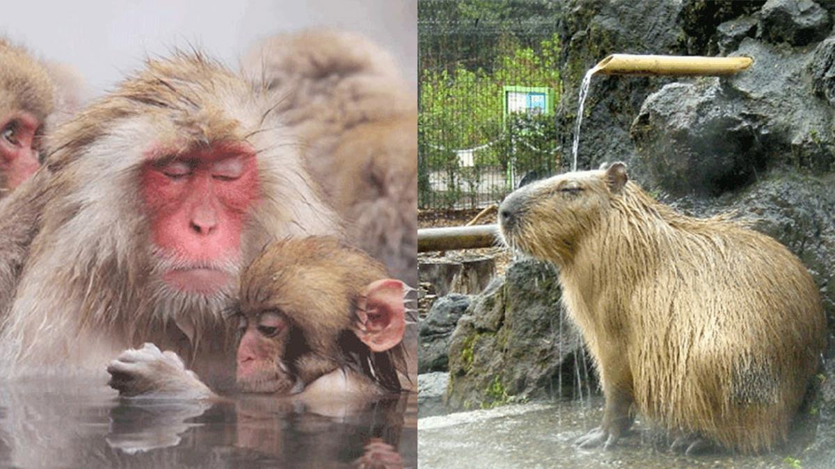 這6隻動物根本就是日本泡湯的觀光大使啊!瞇瞇眼又臉紅紅的舒服模樣也太傳神