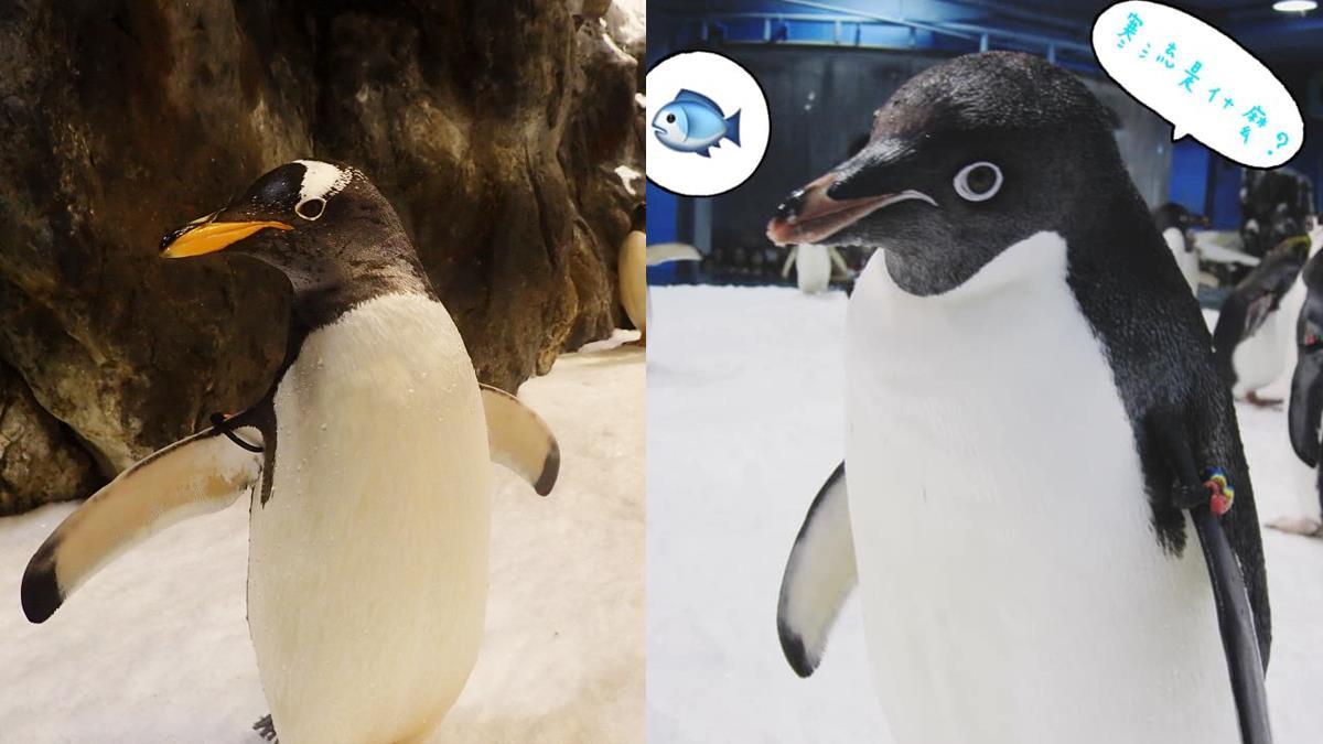 餵呆萌企鵝吃飯超療癒!屏東海生館首創「零距離接觸企鵝」報名日期公開,限定人數必須搶一波啊~