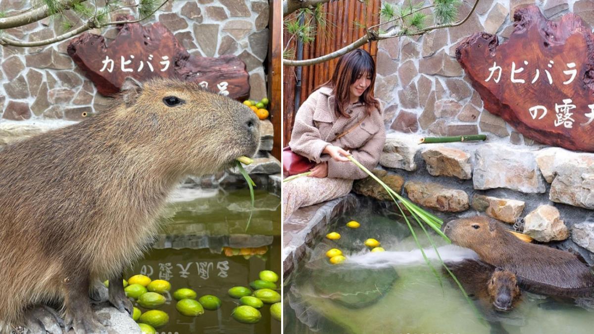 等等,我在臺灣還奈良?宜蘭農場「可愛水豚君&梅花鹿」零距離耍萌,400坪日式庭園一秒置身日本!