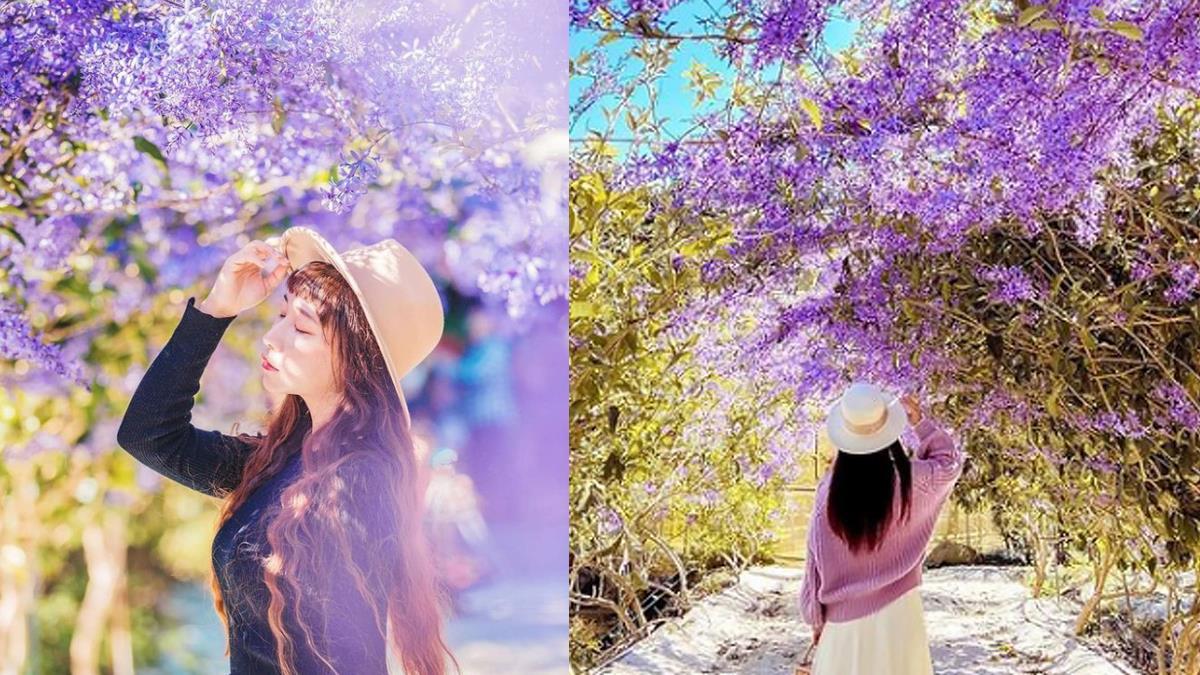 浪漫到以為身在夢境~爆紅秘境「紫色花海隧道」堪稱真實鬼滅場景,絕美景點限定花期要把握!