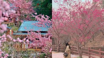 2021年櫻花季來惹!特搜全台賞櫻景點TOP 9,拉拉山除了水蜜桃還能拍美照啊~