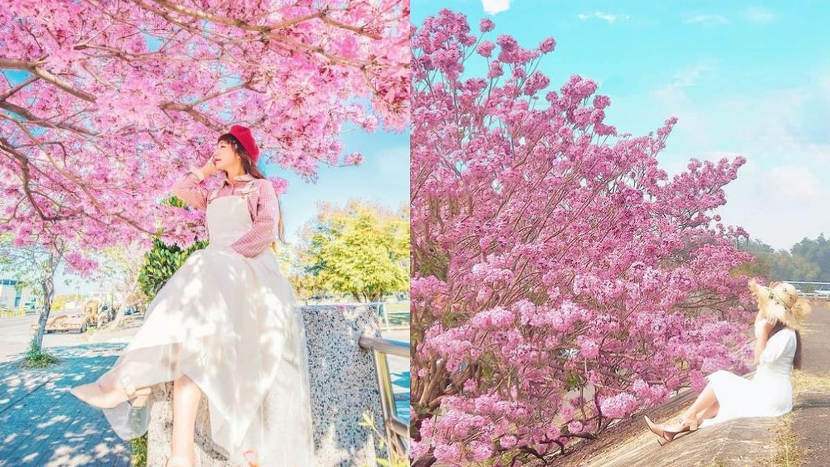 相遇在漫天飄散的粉紅花海♥特搜4處提前盛開的「粉紅風鈴木賞花景點」,根本是春節耍浪漫首選!