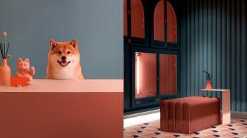 汪!我不想回家了~「高質感+24小時保母服務」寵物住宿,房間空間寬敞到連主人都裝得下!
