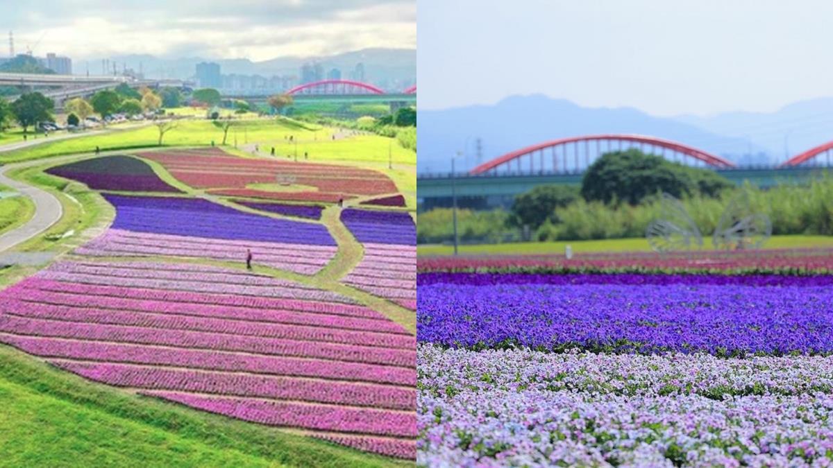 現在正是紫爆地毯的季節!「6色絕美紫色漸層花海」就在古亭河濱,香堇菜、薰衣草滿開畫面超夢幻!