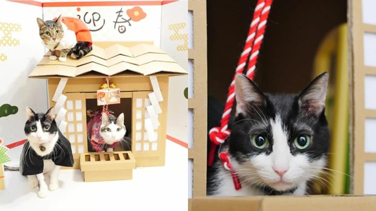 買座貓咪神社回家拜!日本話題募資商品連家中主子都表示很滿意