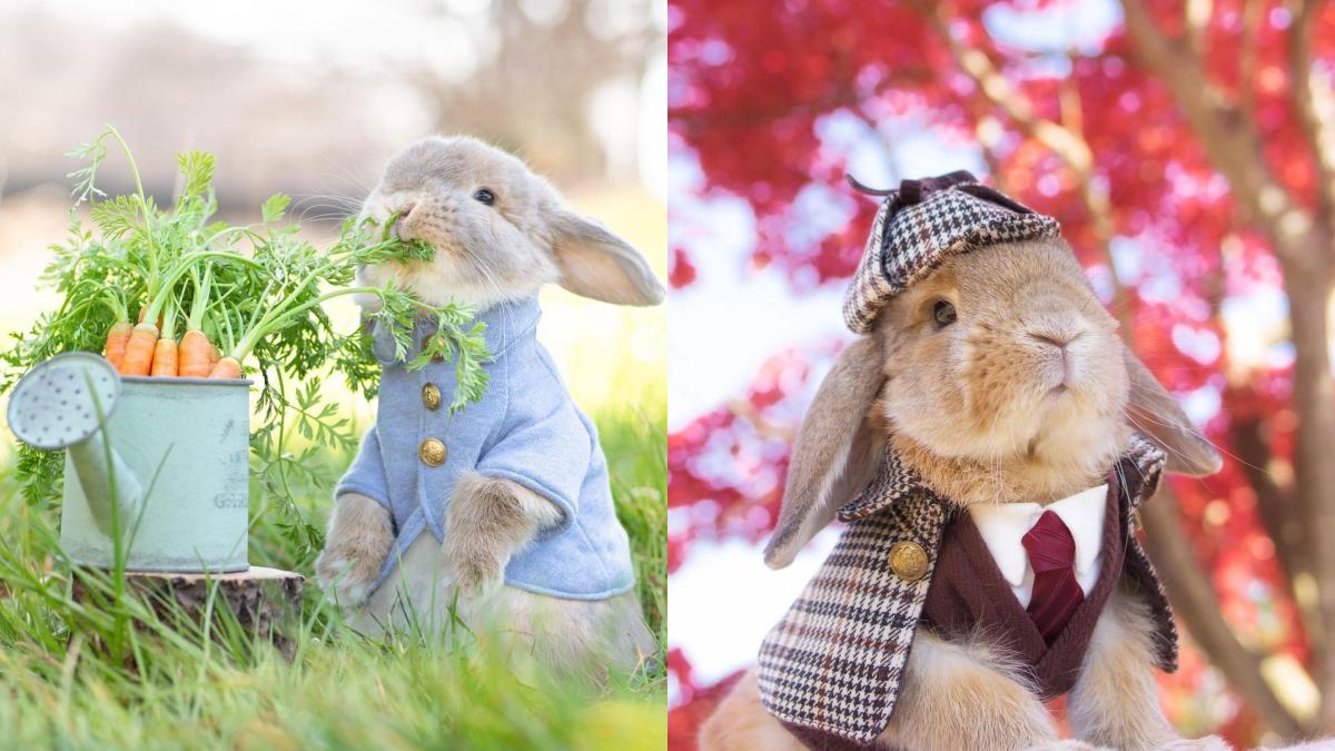 彼得兔本尊底家啦!IG人氣兔兔明星「PuiPui & PicoPico」萌翻天,偵探、新郎&聖誕老公公都能完美駕馭♥
