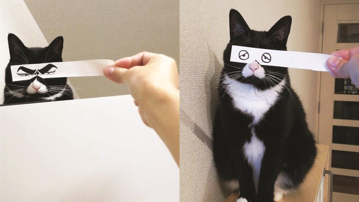 換個眼神喵皇也能成戲佛啊!貓奴自製超有戲惡搞表情包,一秒變身癡情漫畫男主角只是一塊小蛋糕呀~