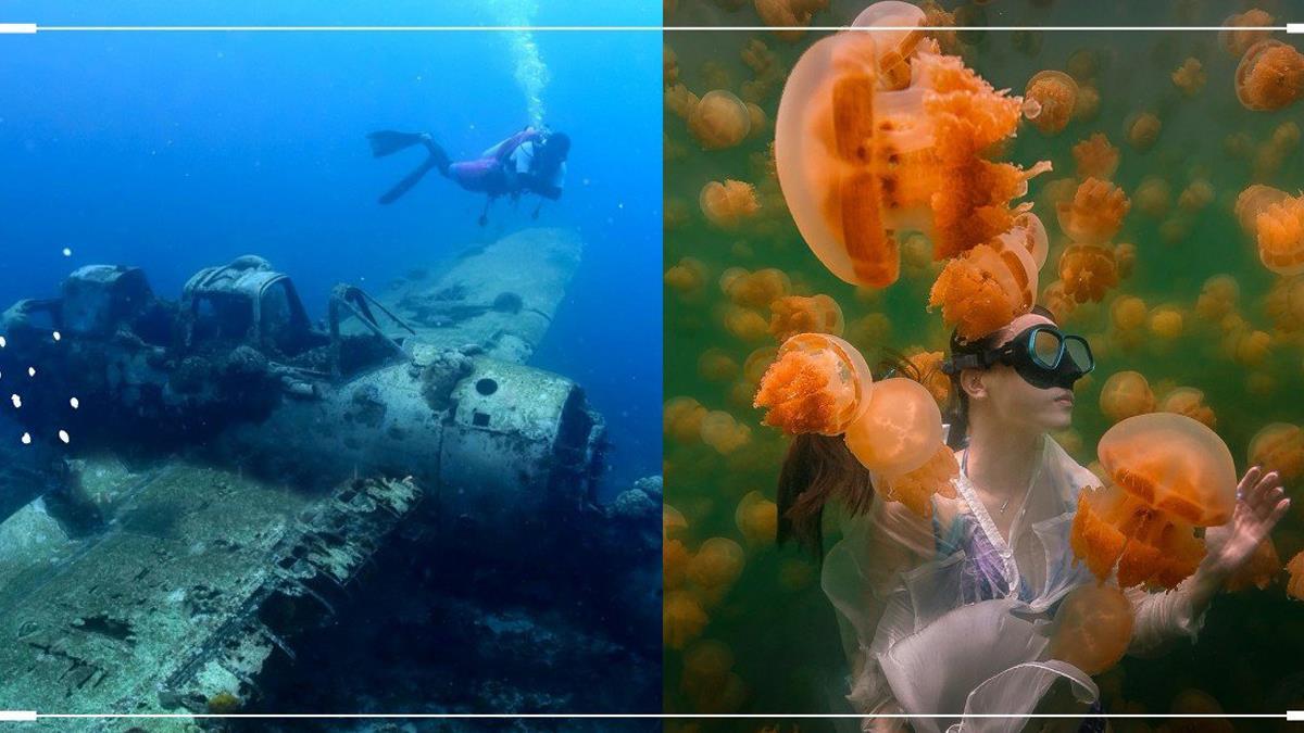 旅遊泡泡功課做起來!帛琉3小島「海洋仙境玩點介紹」,絕美牛奶湖、水母、海牛壯觀到想哭💓