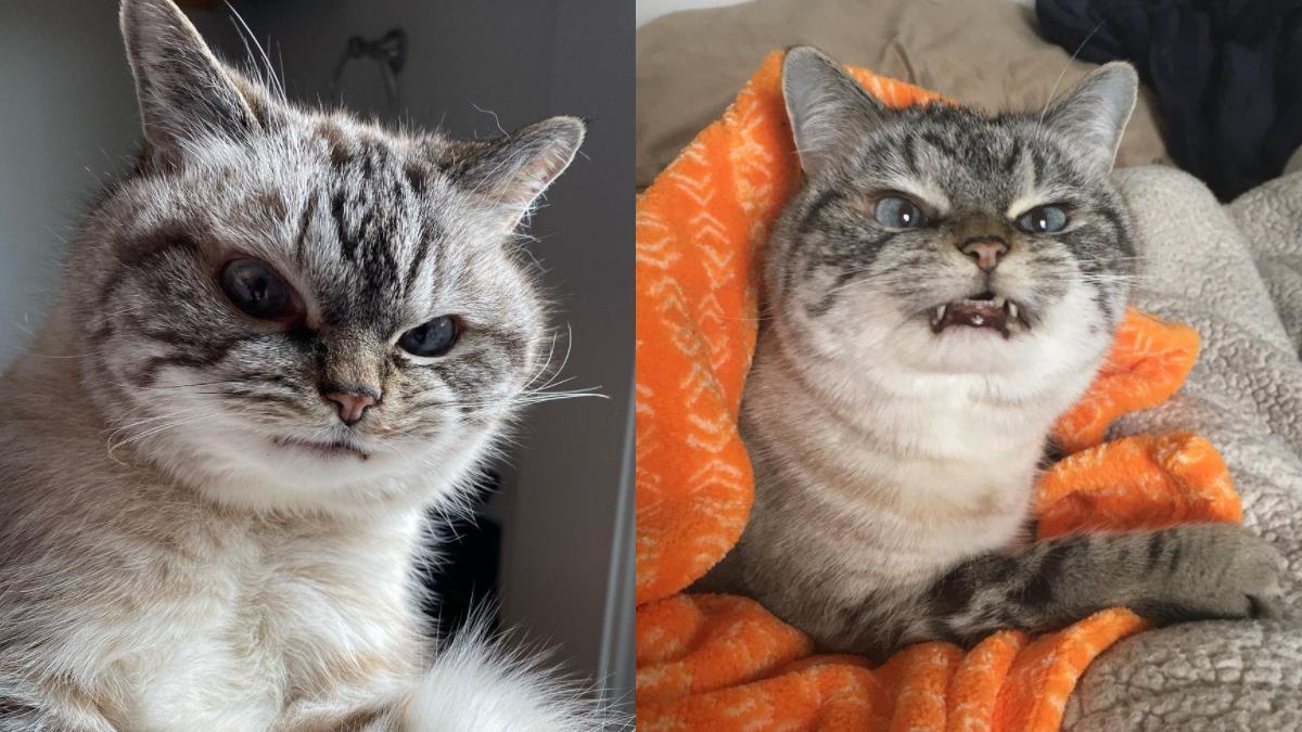 小惡魔貓咪駕到!「全世界最不爽的貓貓」兇猛表情派到笑,眾男友求饒:好像肚子餓的女朋友XD