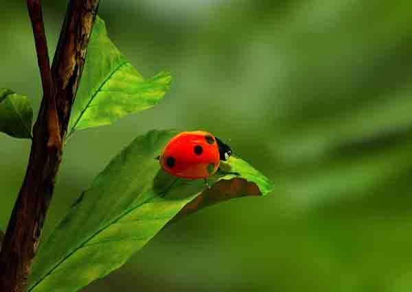 影音/在台灣出現的奇異綠色怪蟲究竟是。。。?
