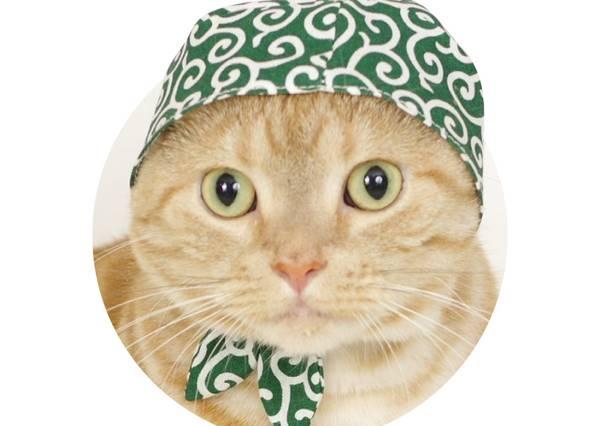 聰明貓星人偷吃飼料,還靠這招把狗狗騙的團團轉!?