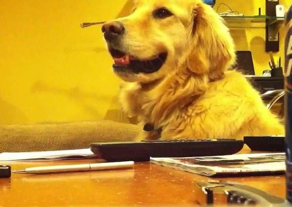 狗狗變臉跟翻書一樣,原因居然不是食物而是㊙㊙!?