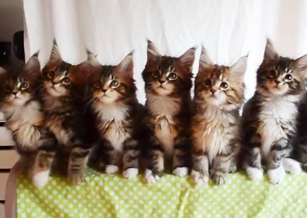 7隻小貓被逗貓棒耍得團團轉,最左邊的甚至伸出手來抓,但牠最後能抓到什麼呢...?