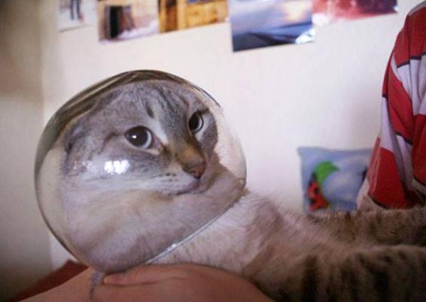 當貓咪碰上魚缸會發生什麼事?牠會變成軟骨功達人!