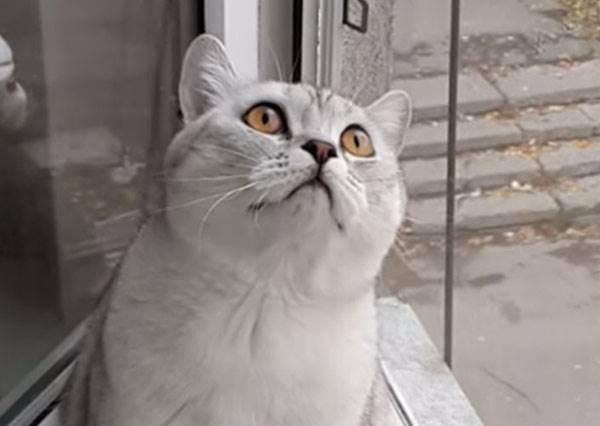 貓咪「已騷不回」,不管怎麼戳戳、搔搔就是動也不動,就是它看到什麼了呢?!
