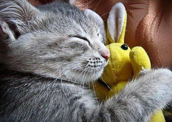 不只是baby,原來連貓咪乖乖睡覺的必備品也是它?