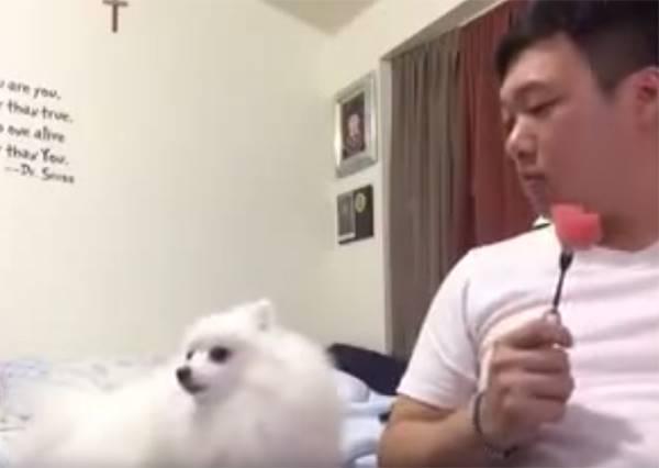 這隻想吃西瓜又不敢讓主人知道的狗狗,「口嫌體正直」的程度讓人好想玩牠一百次!