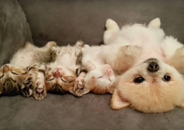 狗狗和小貓咪在玩裝睡遊戲,可是當小貓開始亂動後,才是最融化的時刻~