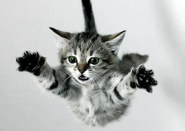 失敗的飛天貓爆笑大集合.....最後一隻你是來亂的嗎?