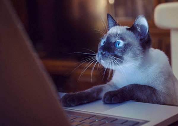 和貓星人一起上班會如何?我真的無法告訴你是天堂還是地獄!
