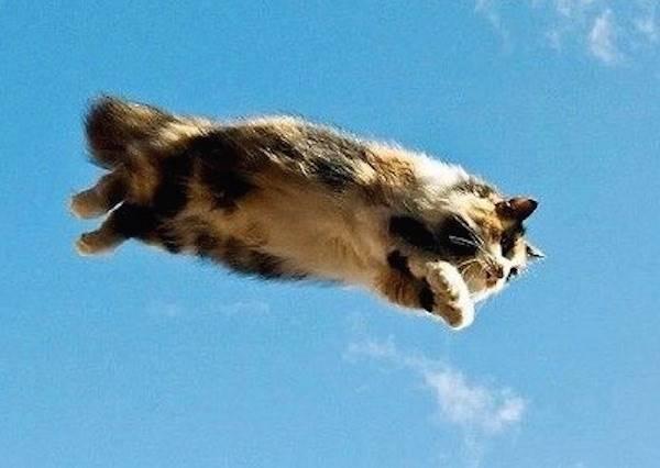 我們都知道貓咪不怕高,但連玩高空跳傘居然還是沒在怕!?