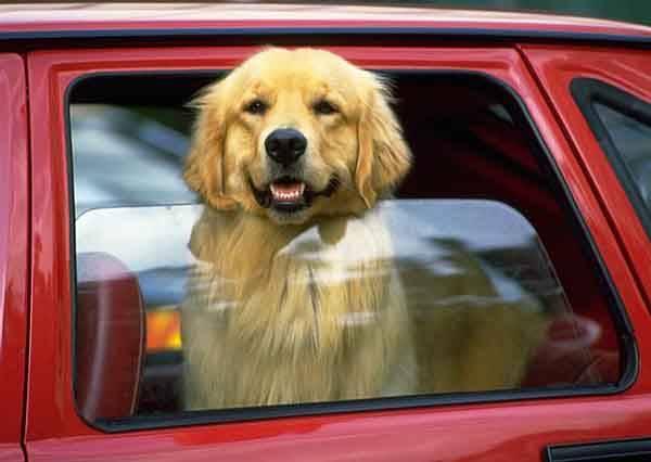影音/千萬不要把寵物留在車裡 實驗告訴你為什麼