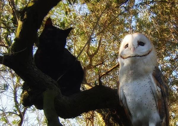 只要名字有「貓」都是好麻吉?看貓咪和貓頭鷹把森林當遊樂場,嬉鬧畫面超療癒!
